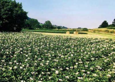 02 campo di fiori